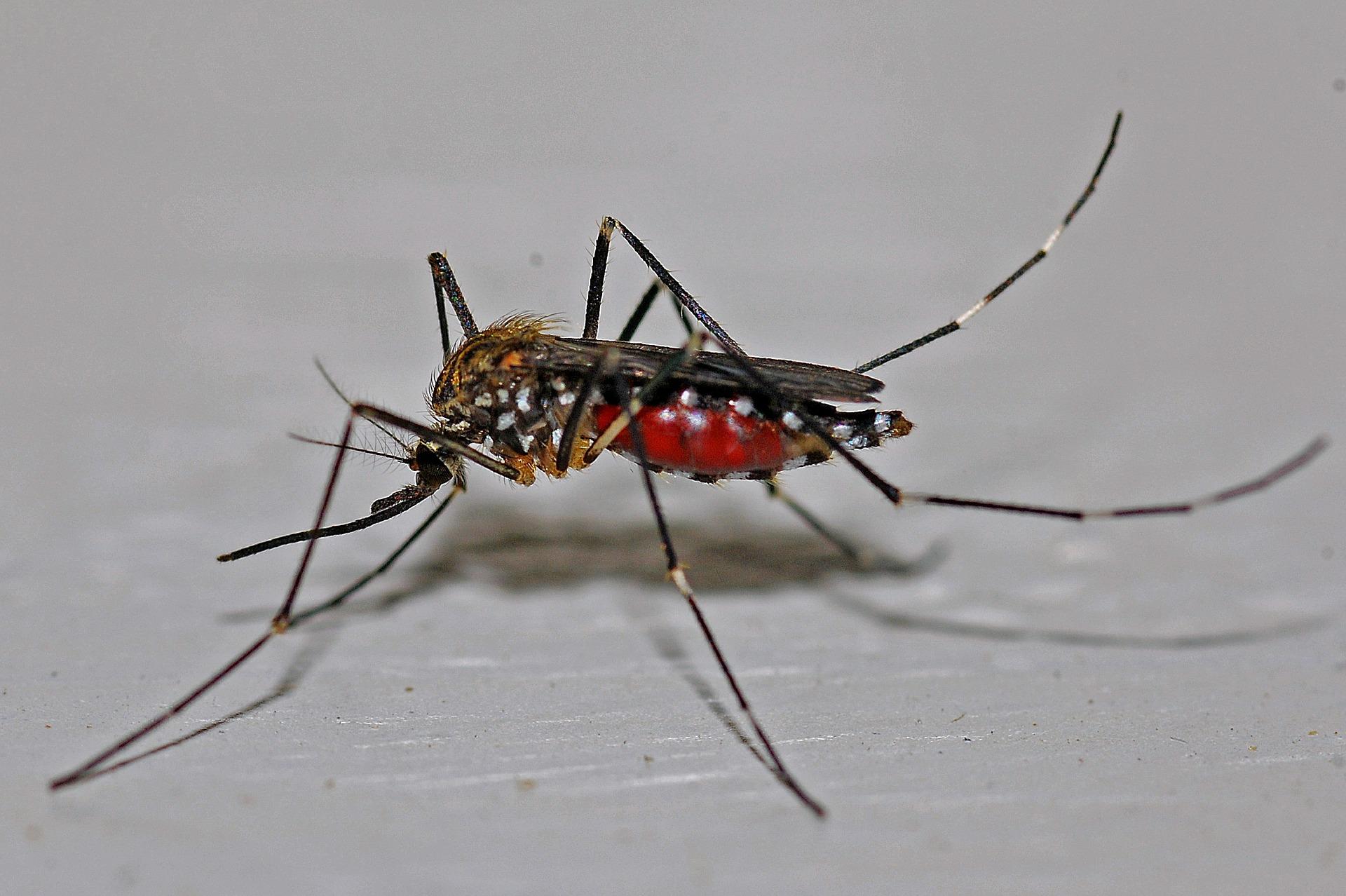 Dengue à la Réunion: 110 nouveaux cas déclarés en une semaine