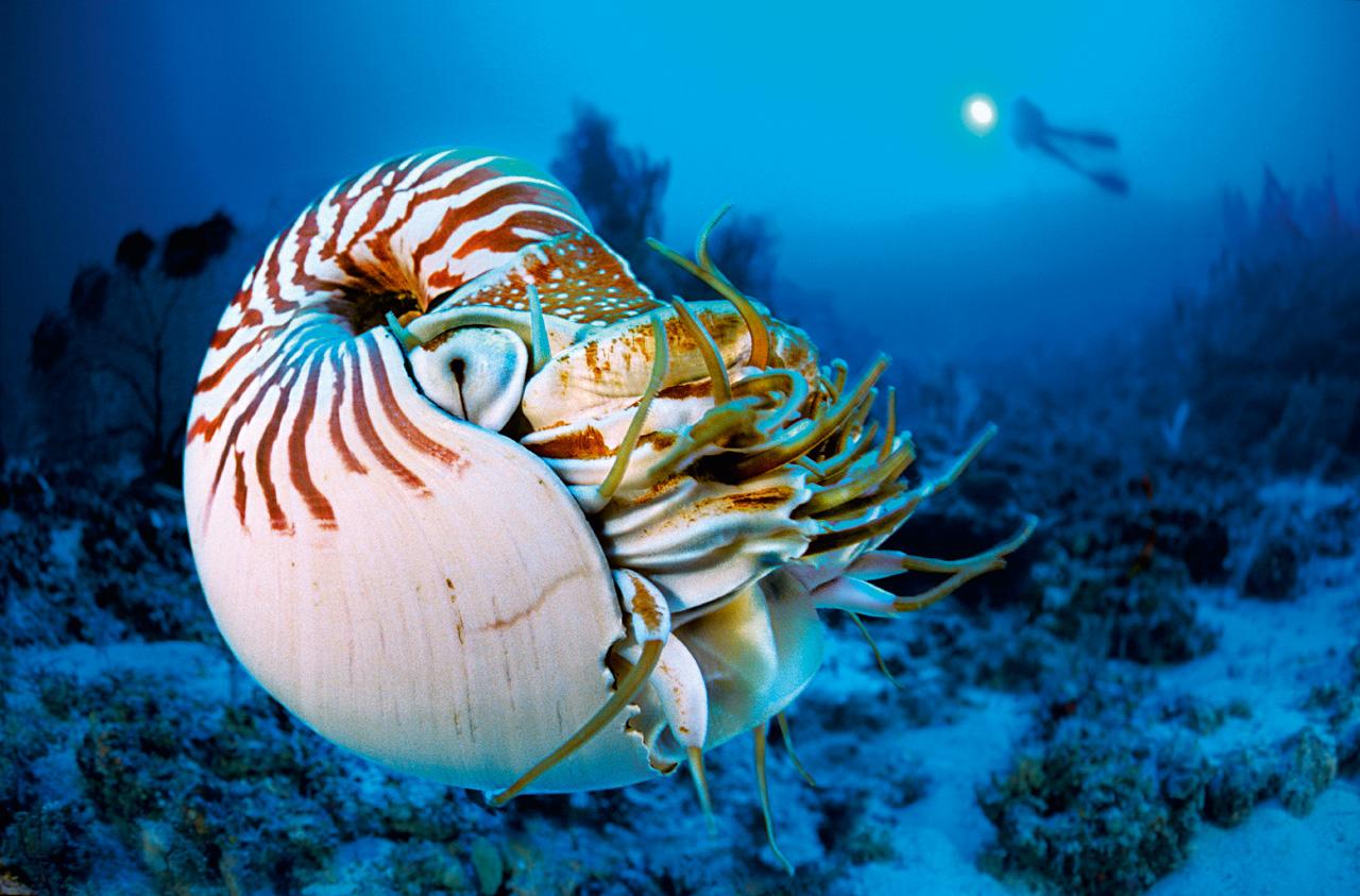 Les récifs et lagons fourmillent d'espèces et d'organisme vivants, indispensables à l'équilibre de la planète ©Laurent Ballesta