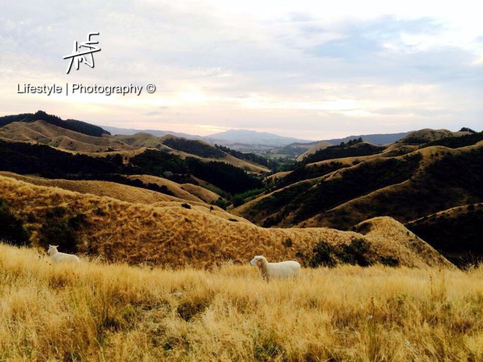 """Les paysages néo-zélandais, à couper le souffle. Pas étonnant que la saga du Seigneur des Anneaux ait été tourné à """"Aotearoa"""" ©Maui Neri"""