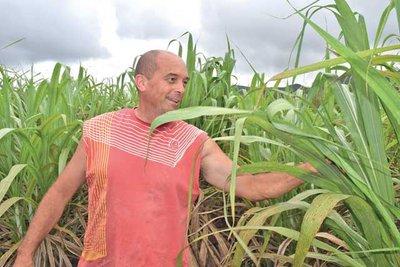 Philippe Bruot présente les premiers champs de canne à̀ sucre (©A. T/ Les nouvelles Calédoniennes)