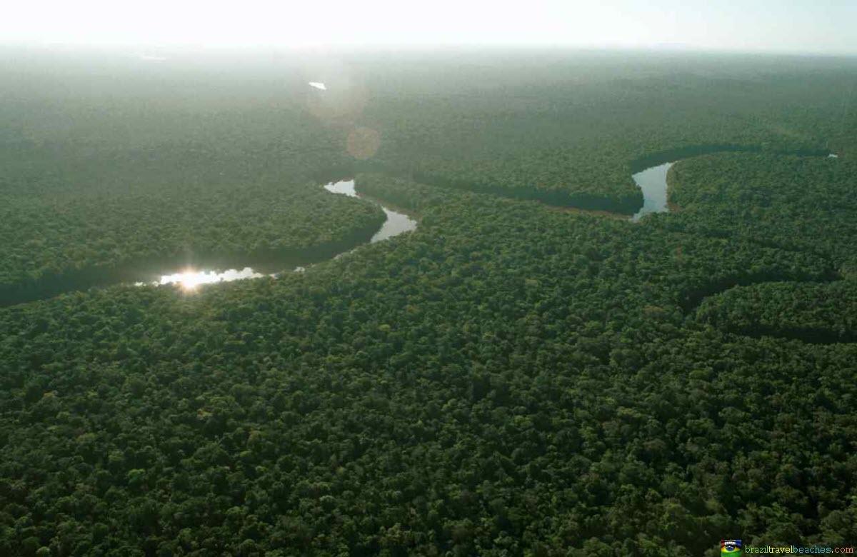 Premier poumon de la planète, la forêt amazonienne est en grand danger. Entre 36 à 57% des essences sont menacées d'extinction ©Brasil Passion