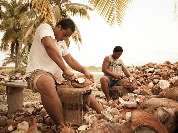 L'huile de coprah, produit de base du Monoï de Tahiti, est exclusivement produit dans les archipels des Tuamotu et des Gambiers ©B. Thouard