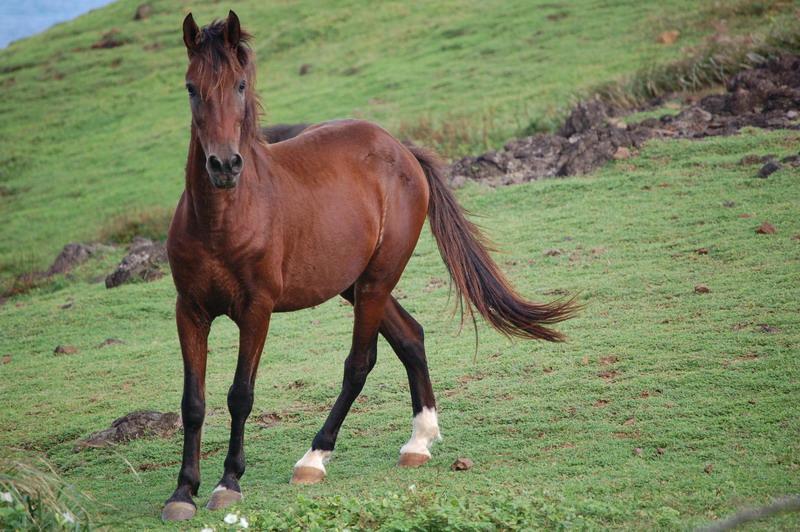 Aux Marquises, on croise des hommes mais aussi des chevaux sauvages ©Tahiti Nui Blog