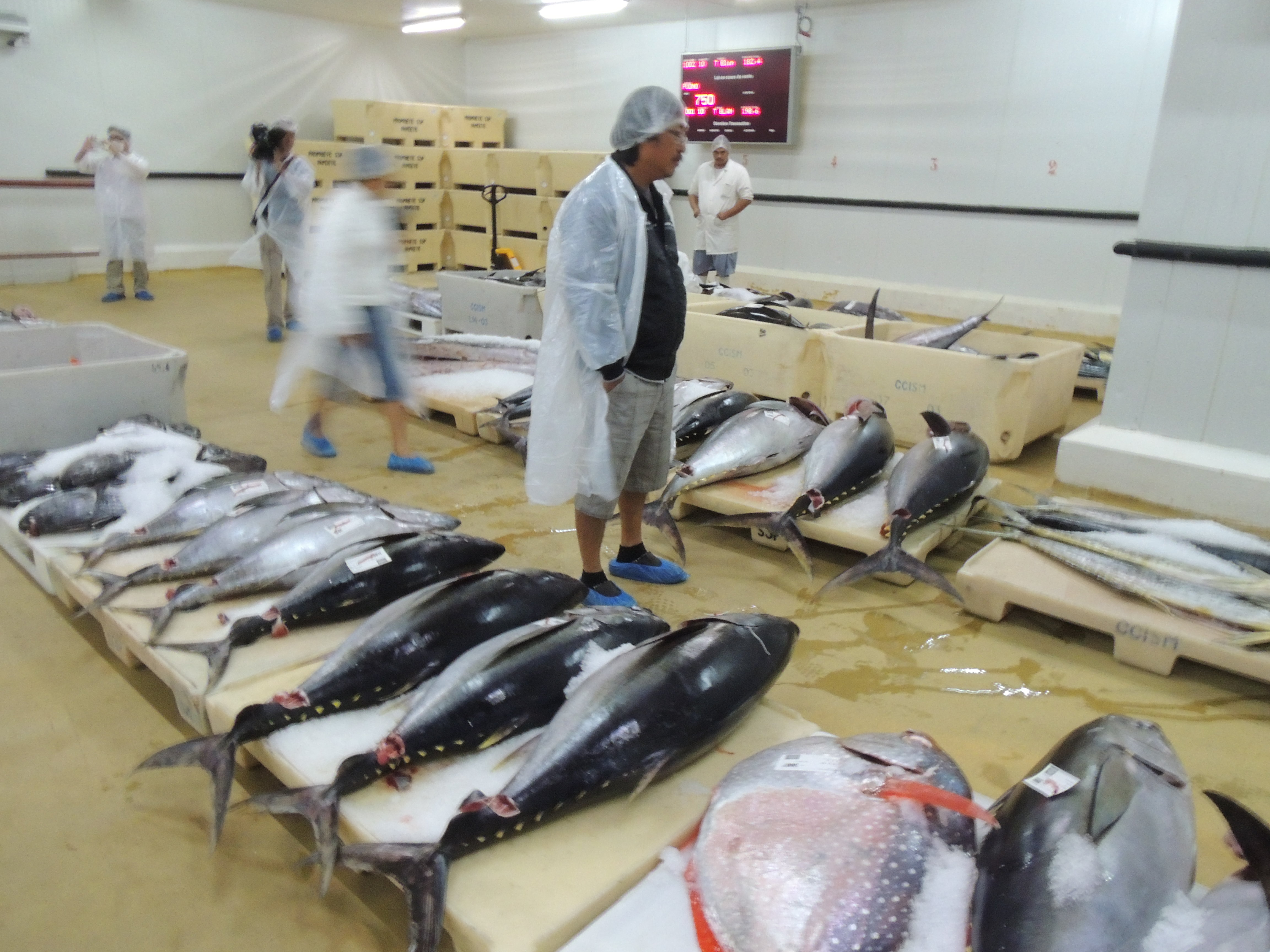 El Nino 2016 : Pénurie de poisson en Polynésie