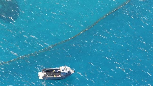 """En 2012, l'île de La Réunion était secouée par une série d'attaques mortelles. Quelques années plus tard, les autorités ont décidé d'installer des filets de protection plutôt que """"prélever"""" la population de requins autour de l'île ©IPRéunion"""