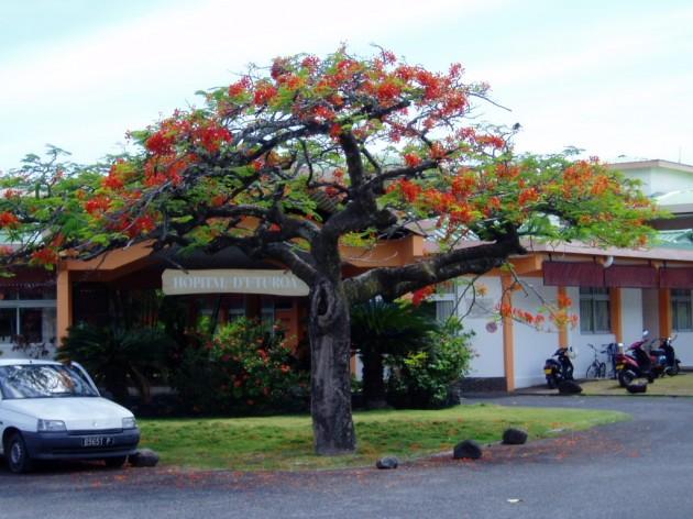 Sur l'île de Raiatea, un collectif pour une meilleure va voir le jour aujourd'hui. Leur première demande : l'achat et l'installation d'un scanner pour l'archipel des Îles-Sous-le-Vent ©DR
