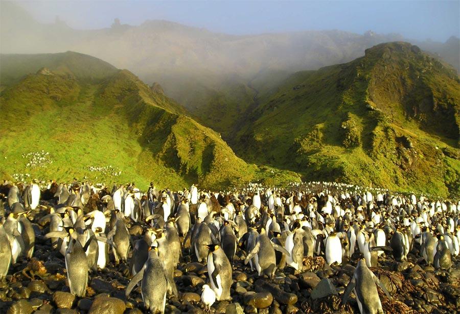 Les manchots de l'île Crozet ©TAAF