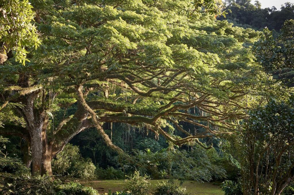 Le Zamana de la Martinique
