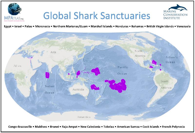 Le sanctuaire de requins de la Polynésie française, créé en 2012, est le plus vaste au Monde