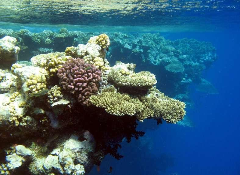 Rapport GIEC: Recul du trait de côte, migrations des espèces, montée des eaux, les risques pour les tropiques?
