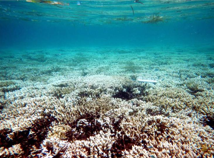 Blanchiment du récif corallien en Polynésie ©DR