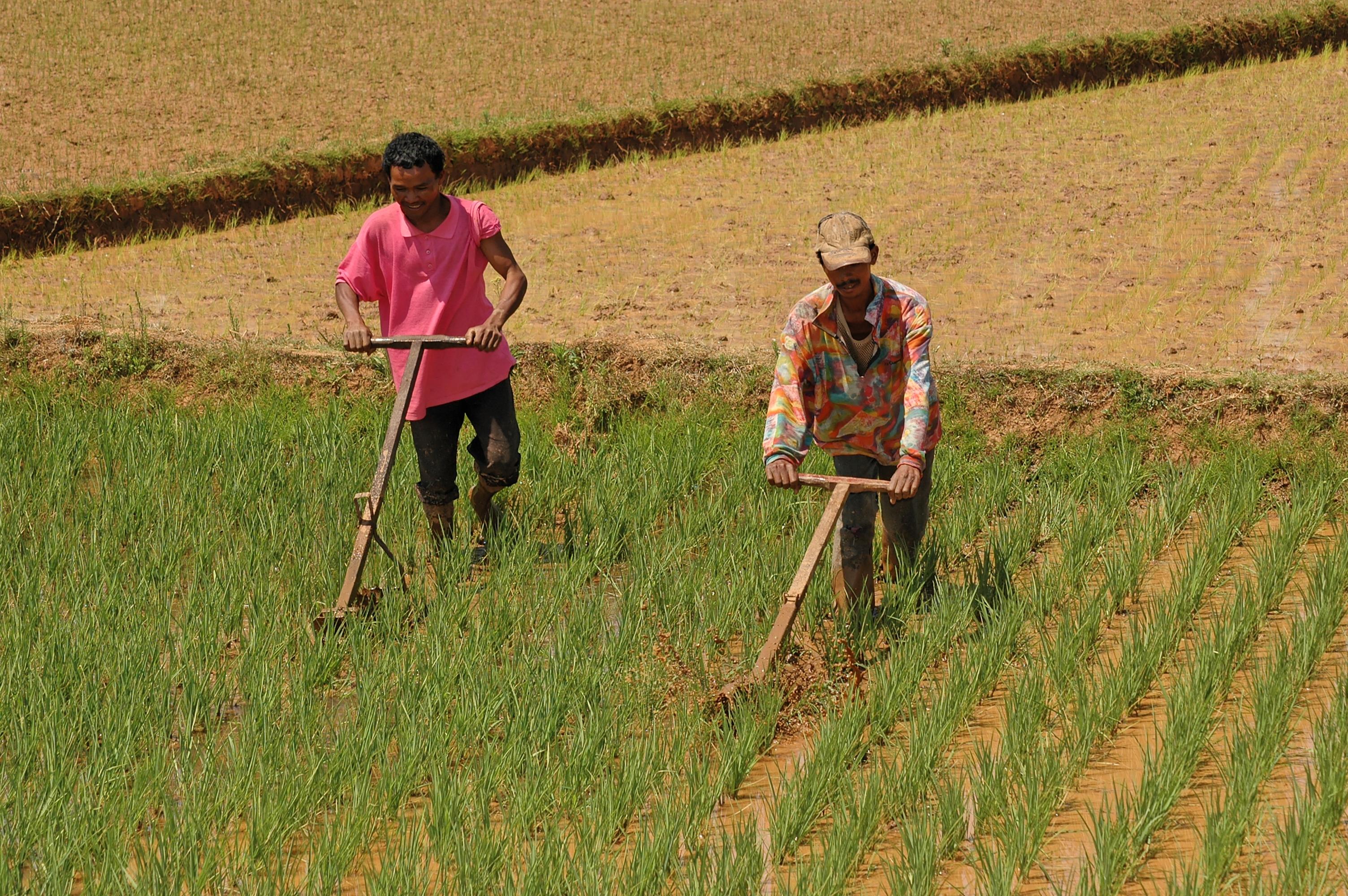 Wikwio a pour vocation ultime d'aider les agriculteurs malgaches à être plus efficaces ©DR