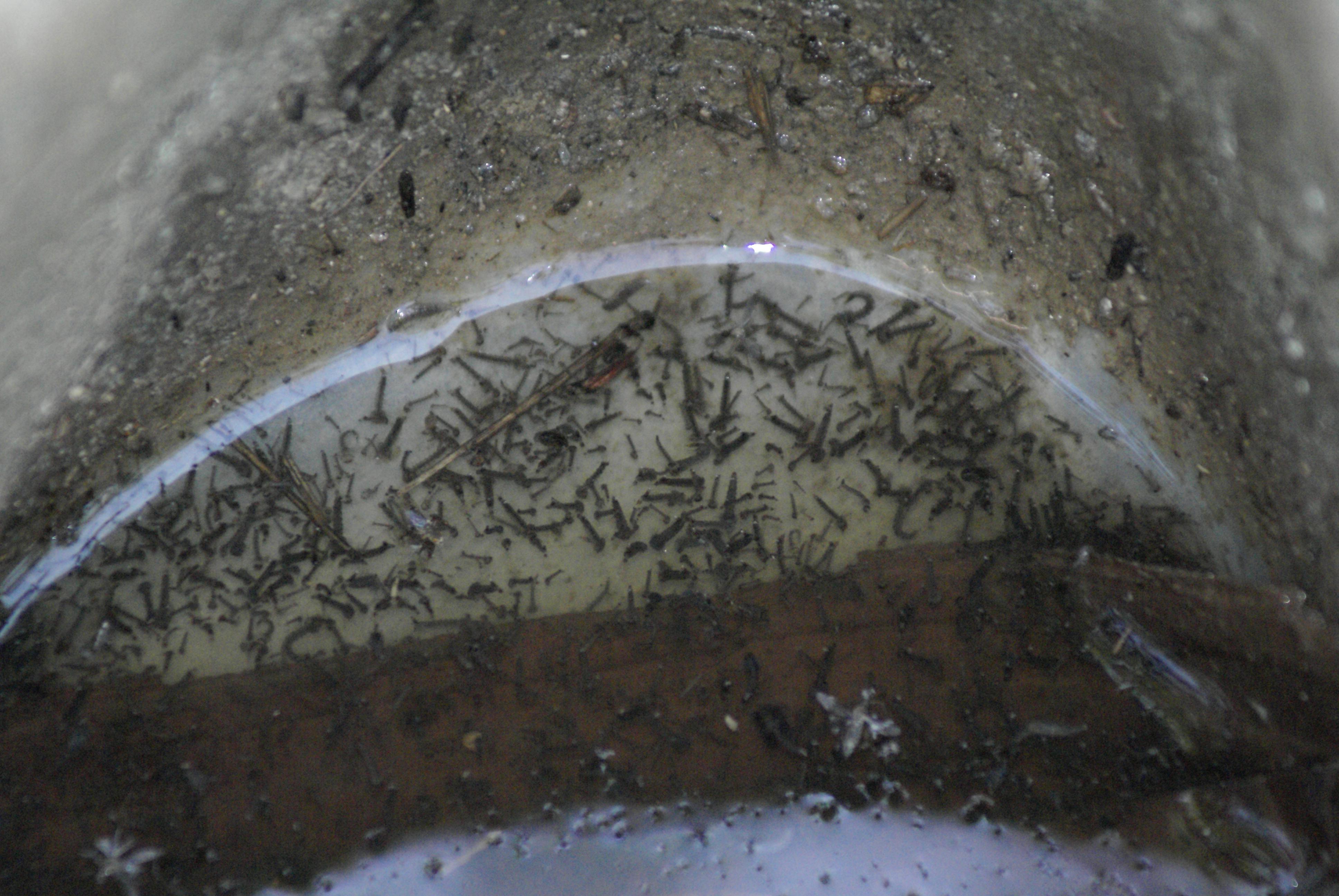 Valentine Eurisouké appelle à détruire les gîtes larvaires ©DR