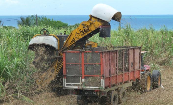 Agriculture en outre-mer : Le premier comité de transformation agricole installé à La Réunion