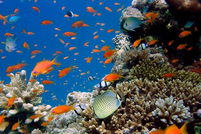 Conférence de Carthagène/ Biodiversité: L'Appel de Guyane instituant la protection de la mer Caraïbe et des Guyanes adopté