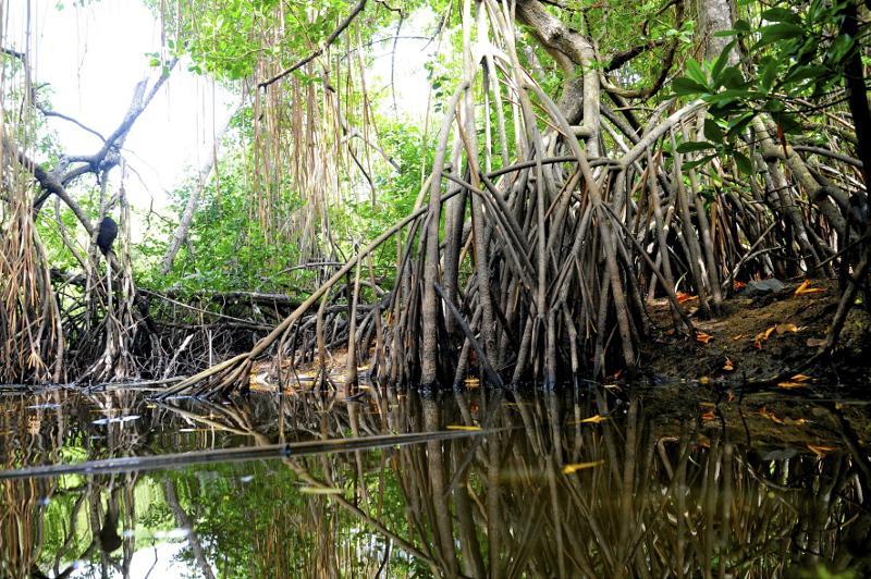 Les Outre-mer abritent 80% de la biodiversité française ©B. Celica / Cœur de Nature / SIPA