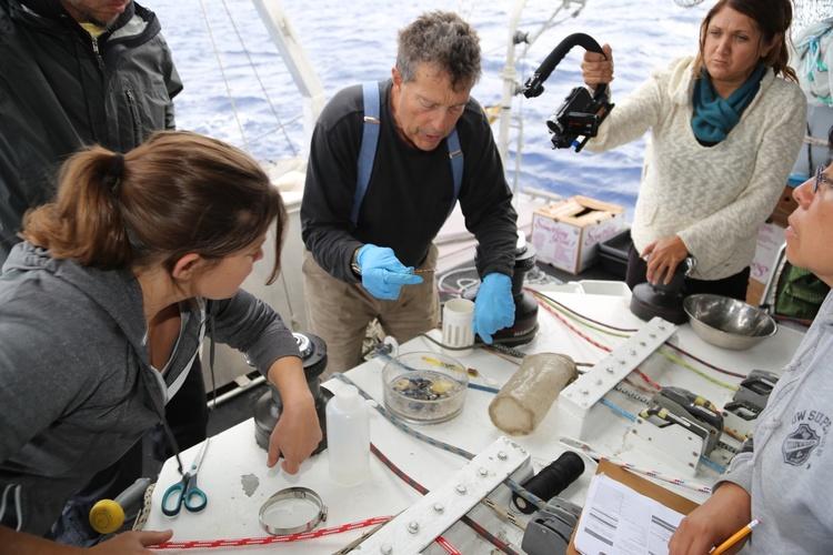 Charles Moore et les chercheurs de l'Algalita Marine Research Foundation ©Charles Moore