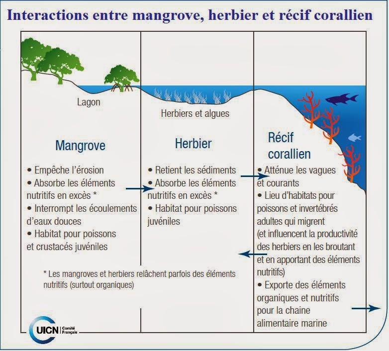 Zones+Humides+IUCN+Interaction+Mangrove+herbier+Récif+Corallien+ecosystèmes+marins+tropicaux