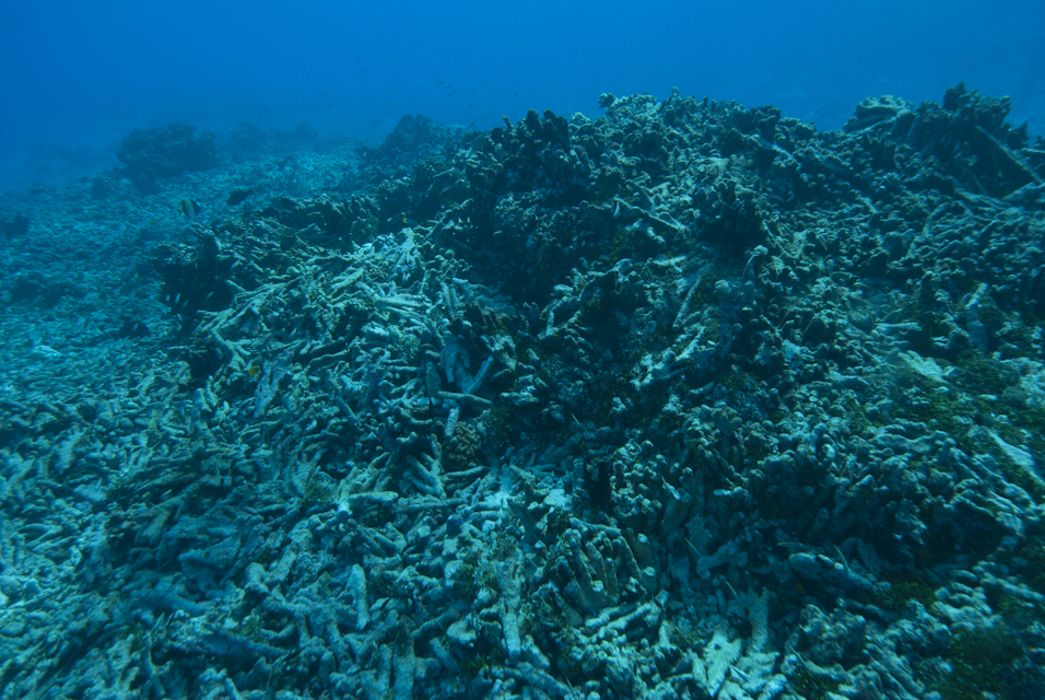 Corail mort dans le lagon de Rangiroa, Archipel des Tuamotu (Polynésie française) ©M. Dupuis