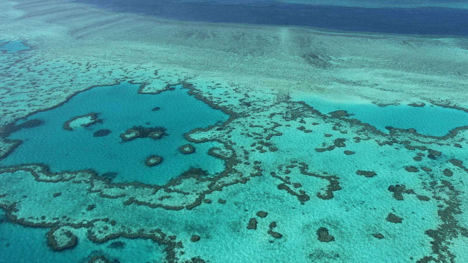 La Grande Barrière en Australie est fortement menacée par le blanchissement des coraux ©Sarah Lai / AFP