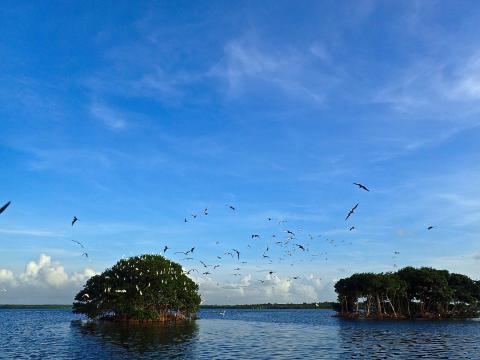 Biodiversité : Le Parc National de Guadeloupe met en place une taxe et une redevance pour protéger ses espaces naturels.