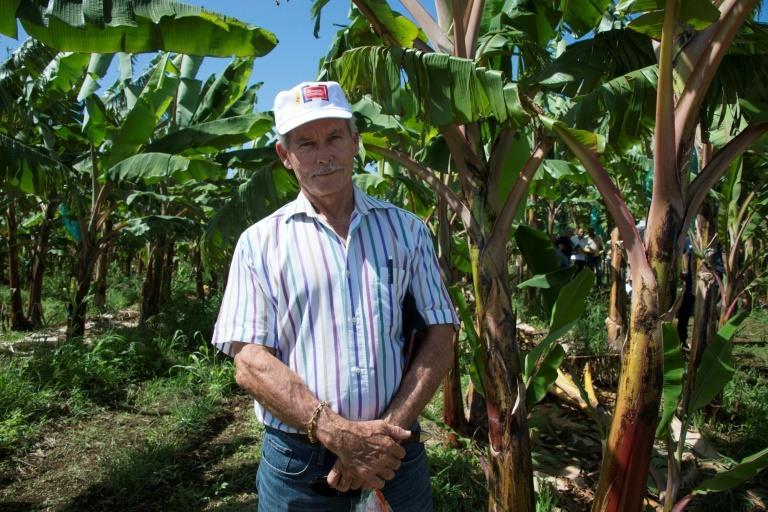 Francis Lignieres, président des producteurs de bananes en Guadeloupe, dans l'exploitation de la SCA Blondinière à Capesterre Belle-Eau, (Guadeloupe), le 10 avril 2018 ©Hélène Valenzuela / AFP