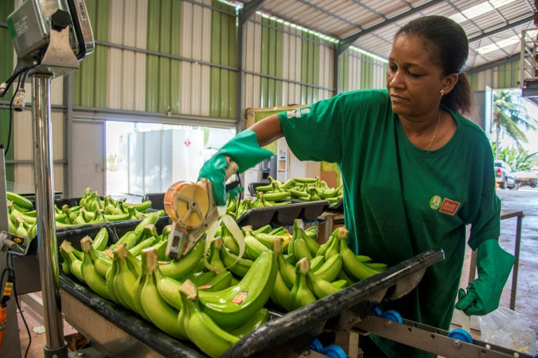 Une employée met des étiquettes sur les bananes dans le centre de stockage de l'exploitation de Changy-Dambas à Capesterre Belle-Eau, en Guadeloupe, le 10 avril 2018 ©Hélène Valenzuela / AFP