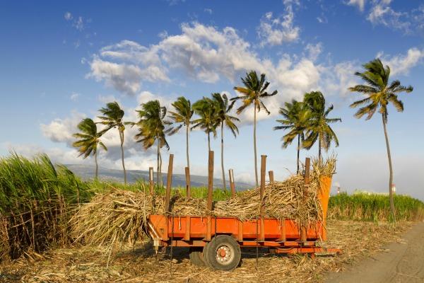 Economie Outre-mer : « La crise du sucre annoncée s'enracine », Dominique Martin Ferrari