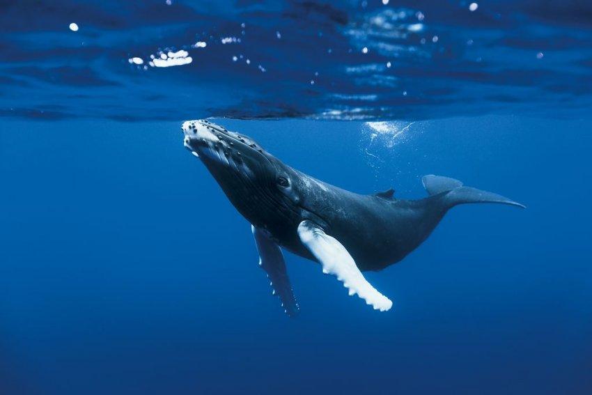 Biodiversité : La vie marine sauvage est en train de disparaitre