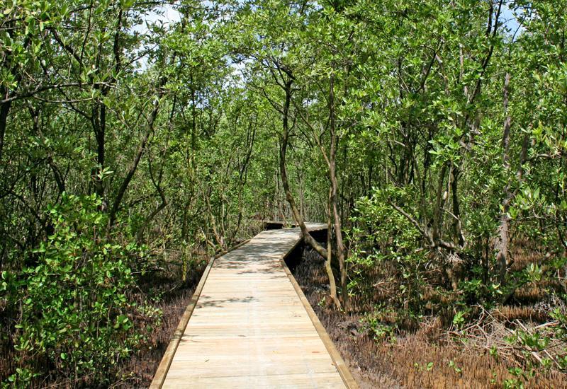 mangrovemal