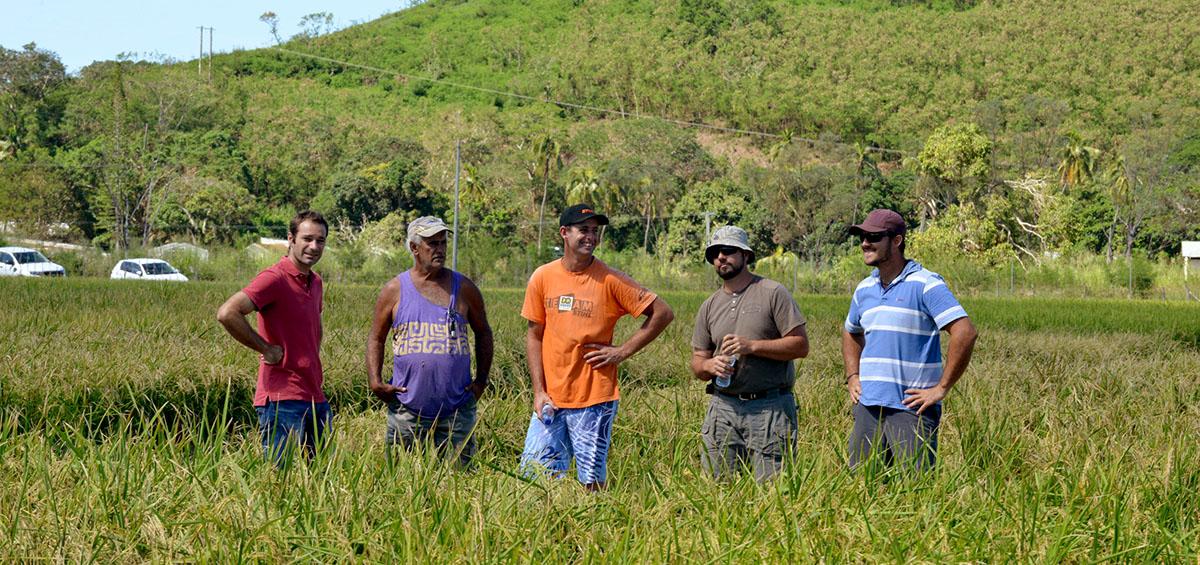 Producteurs de riz en Nouvelle-Calédonie ©Gouv.nc