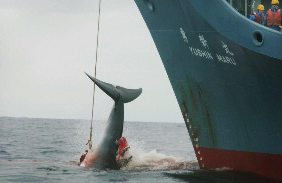 Le Japon souhaitait ©Jeremy Sutton-Hibbert / EPA / Greenpeace
