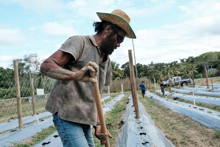 En une quarantaine d'années depuis 1978, 160 000 hectares ont été restitués aux Kanak ©Théo Rouby / AFP