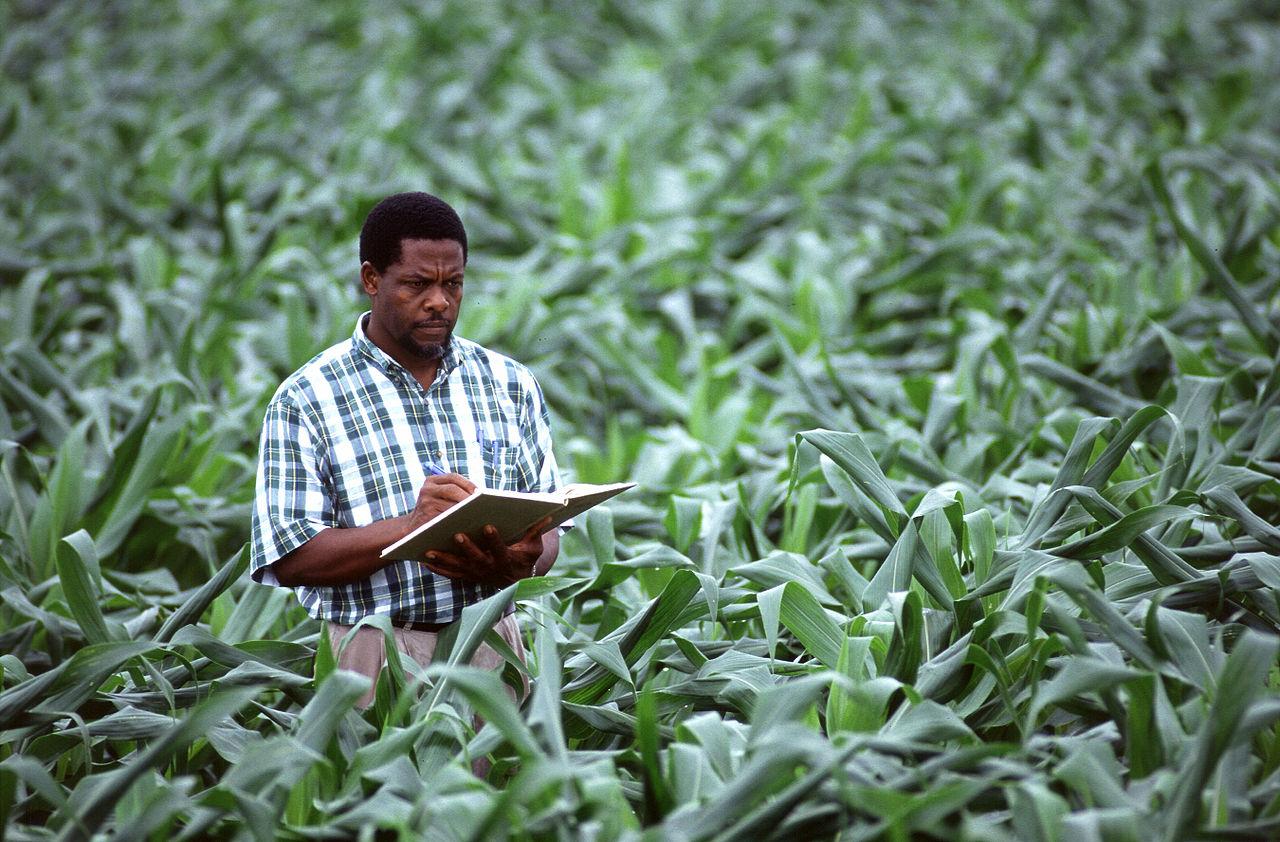 NumBA : La bibliothèque numérique en agronomie tropicale est lancée