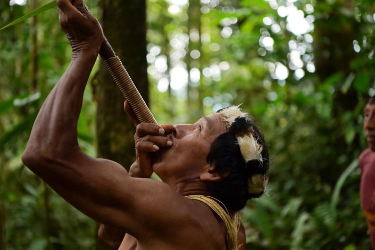 Habiter la forêt tropicale au XXIème siècle : Trois chercheurs de l'IRD se penchent sur la question
