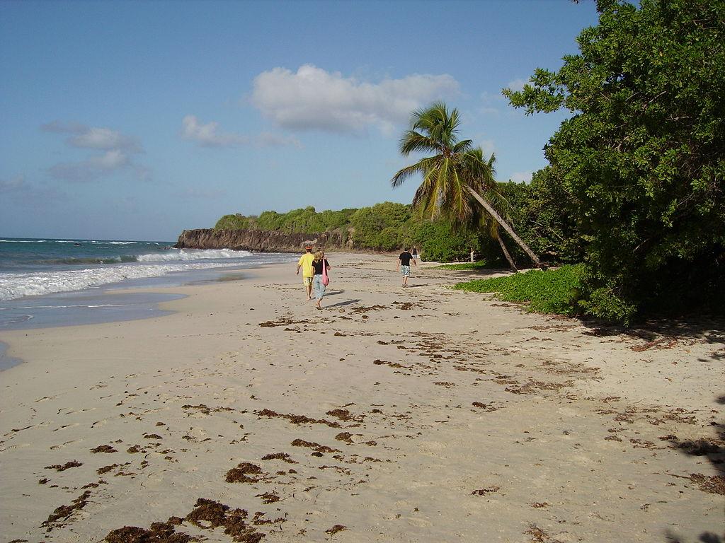 Les Salines en Martinique ©Wikicommons