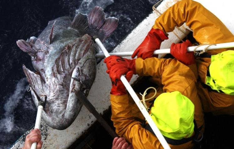 Pêche Océan Indien : Sept armements autorisés à pêcher la légine dans les TAAF