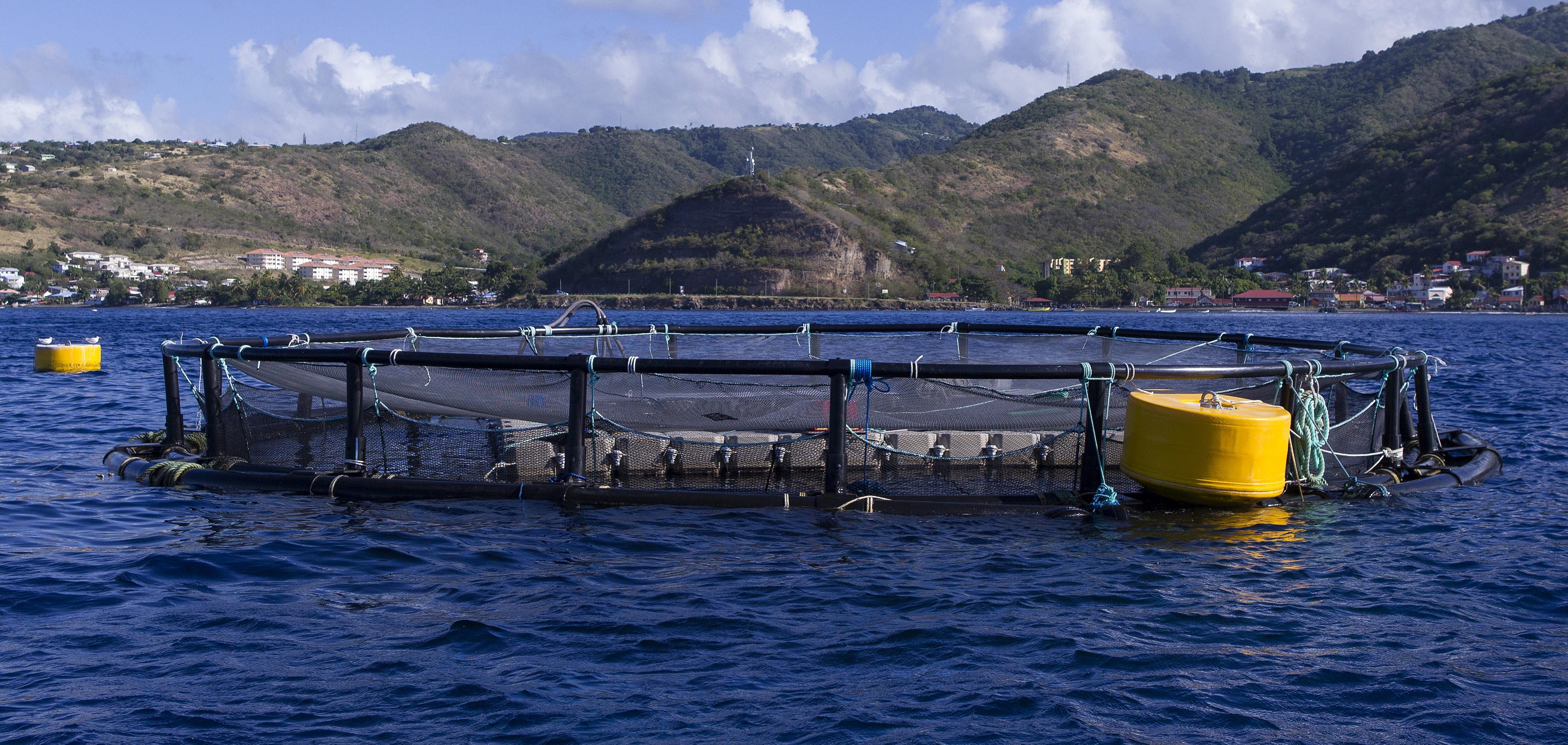 EXPERTISE. L'aquaculture: un outil de planification alimentaire