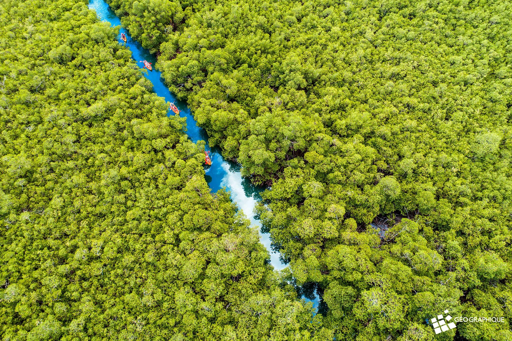 EXPERTISE: La dégradation des mangroves : l'exemple de la baie de Fort-de-France
