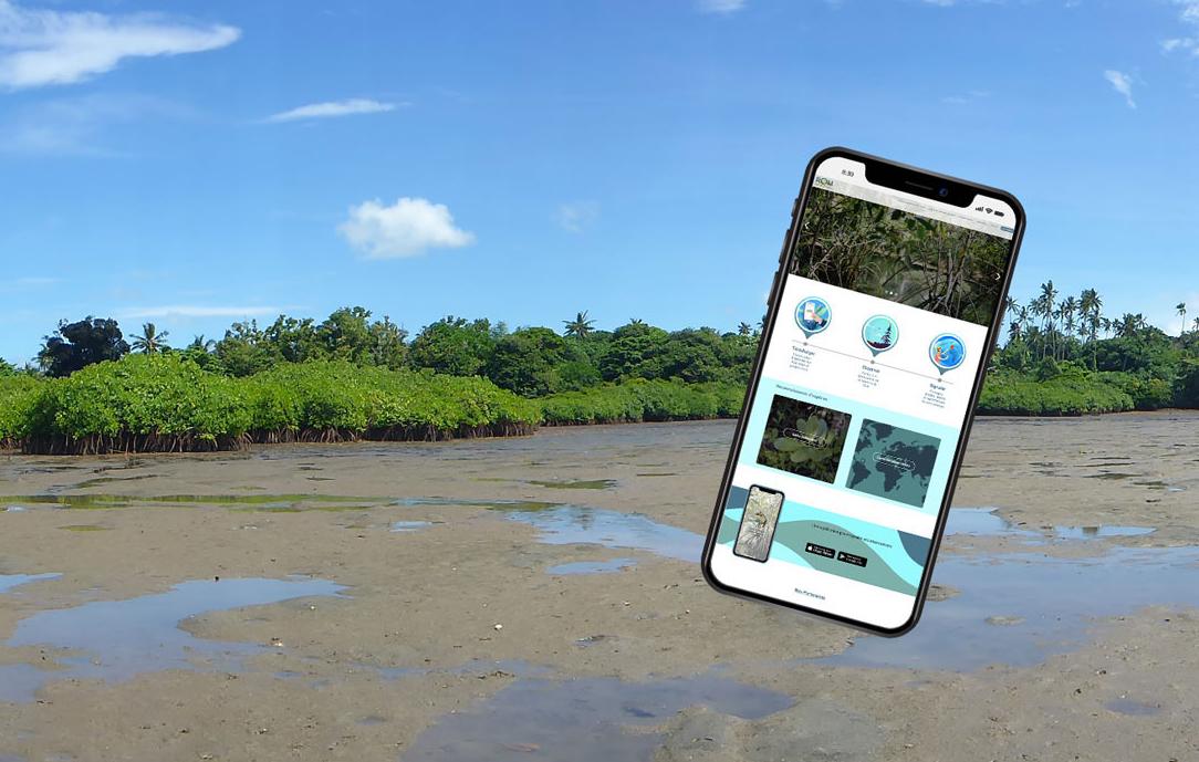 Biodiversité : Une application pour gérer les mangroves déployée en Outre-mer