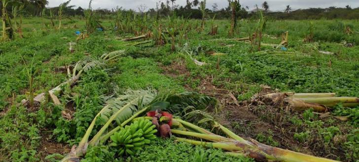 Agriculture en Nouvelle-Calédonie : Près de 55 000 euros d'indemnisation pour calamité agricole