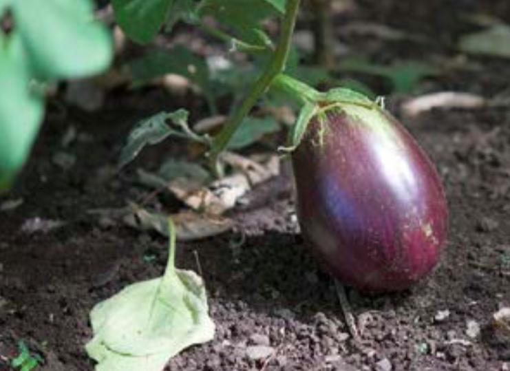 ÉCONOMIE. Fruits et légumes : En Polynésie, la filière locale progresse