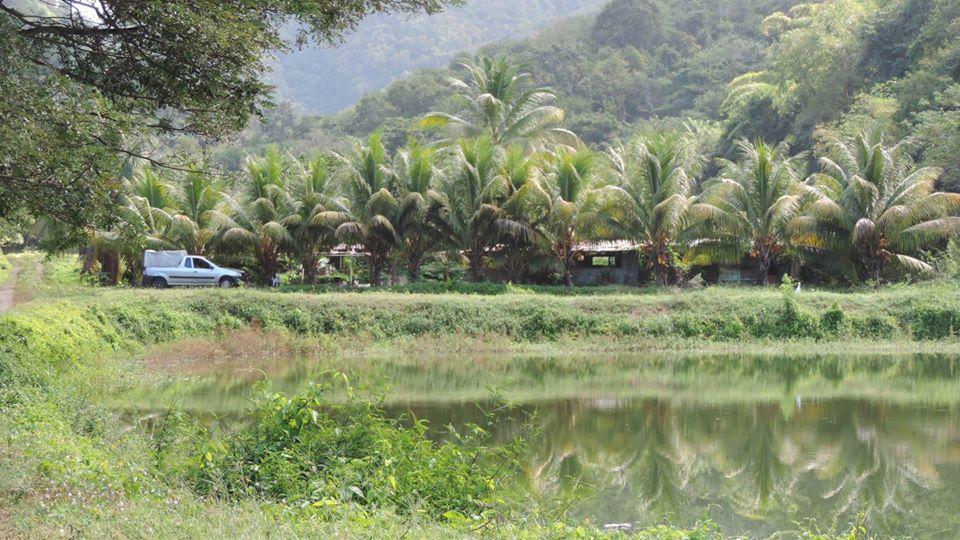 EXPERTISE. Chlordécone et activité aquacole en Martinique