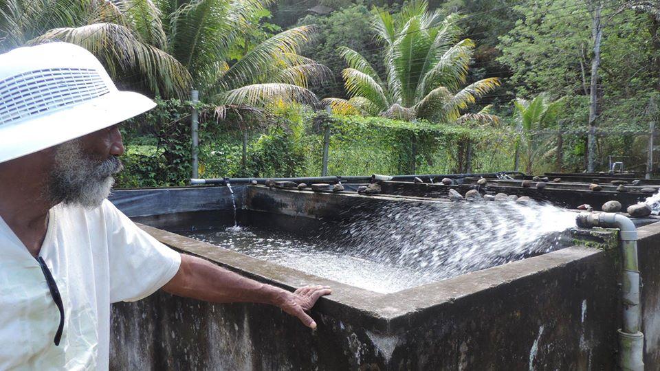Un élevage d'écrevisses au Carbet, en Martinique ©Ville du Carbet