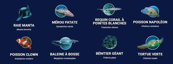 """Les """"Great 8"""" sont les icônes vivantes de la Grand Barrière de Corail que tout plongeur ou apnéiste rêverait de rencontrer dans les eaux turquoises des récifs"""