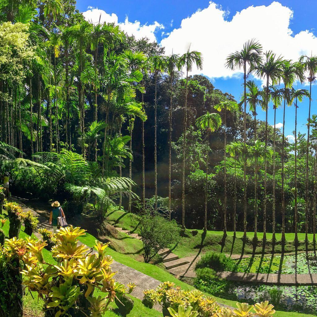 Le Conservatoire Botanique de Martinique agréé au niveau national pour les cinq prochaines années