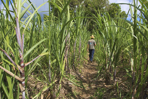 Le député de La Réunion David Lorion interpelle le Président de la République concernant les fonds d'aides européens à l'agriculture des Outre-mer
