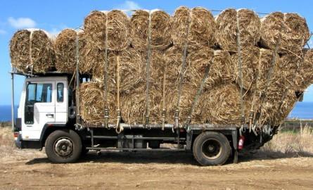 Économie circulaire à La Réunion : Le Cirad fait le bilan de son projet de valorisation des déchets organiques