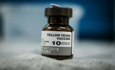 Un homme hospitalisé en urgence à Paris pour fièvre jaune en Guyane