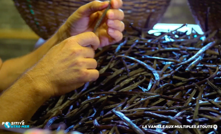 VIDÉO. Positive Outre-mer : La vanille aux multiples atouts de La Réunion
